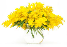 Tak van mimosa's in golf stock afbeeldingen