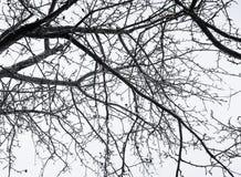 Tak van naakte boom ongebruikelijke hoekmening royalty-vrije stock afbeelding