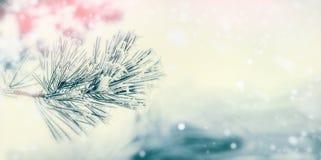 Tak van naaldboom: ceder of spar met rijp en sneeuw bij de achtergrond die van de de winterdag wordt behandeld De winter royalty-vrije stock fotografie