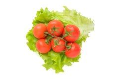 Tak van rijpe tomaten Stock Afbeelding