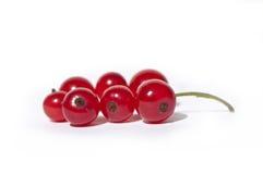 Tak van rode aalbesvruchten Stock Foto's
