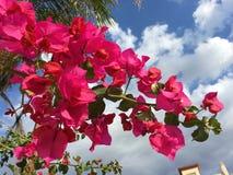 Tak van roze bloemen Royalty-vrije Stock Foto's