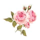 Tak van rozen Stock Afbeelding