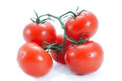 Tak van tomaat Royalty-vrije Stock Afbeelding