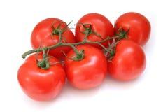 Tak van tomaten royalty-vrije stock foto's