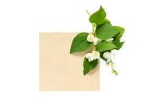 Tak van tot bloei komende jasmijn en lege die kraftpapier-kaart op wh wordt geïsoleerd Royalty-vrije Stock Foto