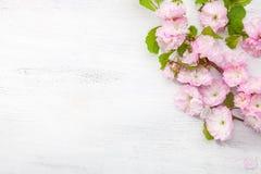 Tak van triloba van Prunus van de bloesemamandel op witte houten lijst Stock Afbeeldingen