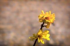 Tak van wilde gele bloemen Stock Afbeelding