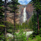 Takakkaw Falls. One of the highest waterfalls in Canada or the world, Takakkaw Falls in Yoho National Park has a drop of over 800 feet Royalty Free Stock Image