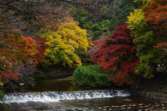 Takano河风通过秋天森林在京都,在秋天期间的日本上色了树 免版税库存图片
