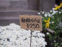 Takayama, Япония - 18-ое апреля 2018: unidentitied цветок и цена Японии ярлык стоковое изображение