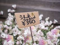 Takayama, Япония - 18-ое апреля 2018: unidentitied цветок и цена Японии ярлык стоковое фото