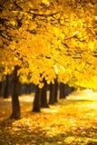 Takbomen met Gele Bladeren in Autumn Park stock foto
