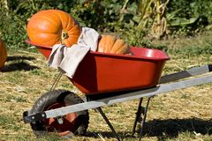 Take it away. A couple of pumpkins in a red wheel barrel Royalty Free Stock Image
