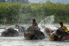Take a bath. KANCHANABURI, THAILAND - SEPTEMBER 22: a group of villagers give elephants a bath on September 22, 2007 in Sangklaburi, Kanchanaburi, Thailand Royalty Free Stock Images