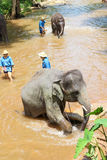 Take a bath elephant Royalty Free Stock Images