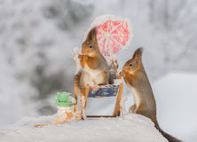 Take a break. Close up of red squirrel standing on a chair with another squirrel with a cup Stock Photo