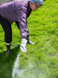 Take care of the lawn. Woman take care of the lawn and fertilize royalty free stock image