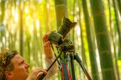 Take-dera nature photographer. Nature photographer photographing giant bamboo forest at sunset in Take-dera forest, the popular tourist destination in Hokoku-ji Royalty Free Stock Photo