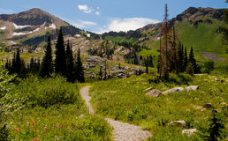 Take a hike. Image of a hiking trail in the mountains of Utah Royalty Free Stock Image