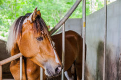 Take a horse out for a walk in the park. Royalty Free Stock Images