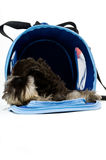 Take me home. A cute dog in her bag royalty free stock photography