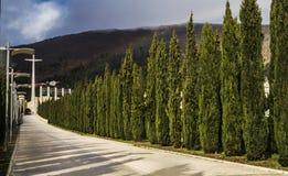 Take me to church in San Giovanni Rotondo. A way to church in San Giovanni Rotondo with cypress Royalty Free Stock Image