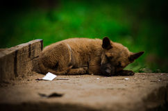 Take a nap. A dog has leaned his head on the ground Royalty Free Stock Images