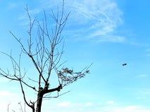 Tree Bird Royalty Free Stock Photography