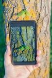 Take photo algae on the bark of a tree Royalty Free Stock Photo