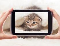 Take a photo of a kitten Stock Photo