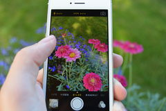 Take a picture of a flower. An Iphone taking picture of a flower Royalty Free Stock Photography