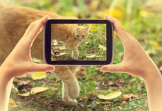 Take pictures cat Royalty Free Stock Photography