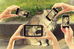 Take pictures of a cat on smartphones Royalty Free Stock Photos