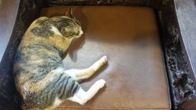 Sleepy cat royalty free stock photo