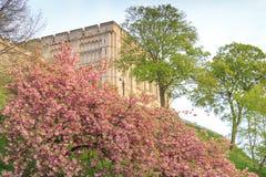 Norwich Castle Stock Image