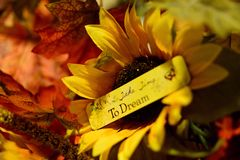 Take Time To Dream. Of Autumn Royalty Free Stock Photography