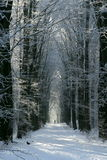 Take a walk on the cold side. Walking in a wintry forest Royalty Free Stock Photography