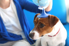 Take your dog on vacation. Royalty Free Stock Image