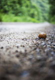Take Your Time!. Snail on forest road after a summer rain Stock Photos