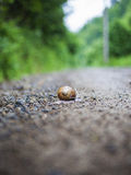 Take Your Time!. Snail on forest road after a summer rain Stock Photo