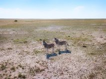 Animals in Etoscha National Park in Northern Namibia taken in January 2018 stock photography