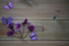 Winter photography image of pink purple cyclamen flowers and fun toy butterflies on rustic wood background and space. Taken in Chichester West Sussex. On the Royalty Free Stock Photography