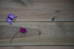 Winter photography image of pink purple cyclamen flower and fun toy butterfly on rustic wood background and space Royalty Free Stock Photo
