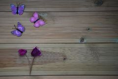 Winter photography image of pink purple cyclamen flowers and fun toy butterflies on rustic wood background and space. Taken in Chichester West Sussex. On the Royalty Free Stock Image