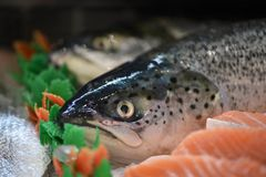 Closeup of the head on a whole fresh raw salmon fish. Taken in a fishmongers in southern England UK. With cut and sliced fresh salmon fillets and a whole fish Royalty Free Stock Photos
