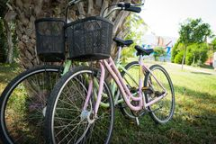 Matching bicycles leaning against a tree royalty free stock photo