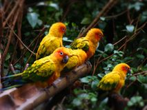 Colourful birds; sitting and watching stock photography
