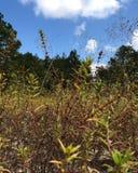 Grassy sky royalty free stock photography