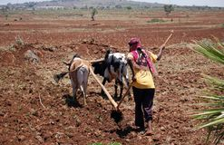 Plowing the Land in Etiopia royalty free stock photos